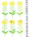 rape, rape blossoms, flower 20665194