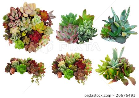 다육 식물 소재 20676493