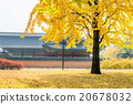 Autumn in Gyeongbukgung Palace,Korea. 20678032