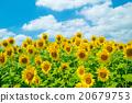 植物 植物學 植物的 20679753