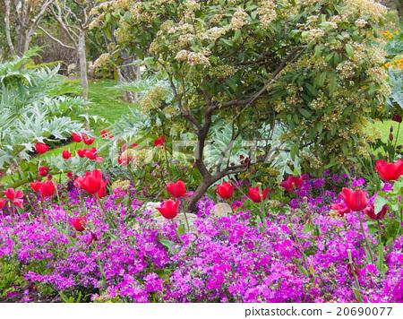 flowers 20690077
