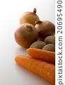 土豆 馬鈴薯 洋蔥 20695490