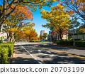 街道樹 行道樹 楓樹 20703199