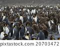 帝王企鹅 小组 团队 20703472