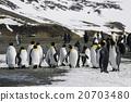 帝王企鹅 小组 团队 20703480