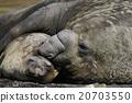南大洋 海洋动物 哺乳动物 20703550