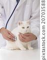 獸醫 貓 貓咪 20703588