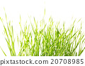 Green grass isolated on white background 20708985
