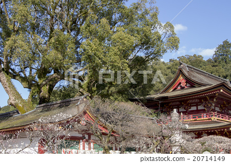 Dazaifu Tenmanguugu 20714149