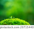 植物幼苗 20715440
