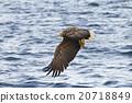 bird, birds, fowls 20718849