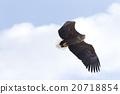 avian, wild, bird 20718854
