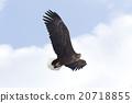 avian, wild, bird 20718855