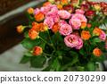 Soft color Roses Background 20730299