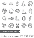 Human anatomy body parts detailed icons set.  20730552