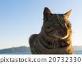 毛孩 貓 貓咪 20732330