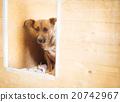 Dog in shelter 20742967