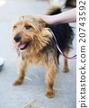 dog, stroke, pet 20743592