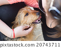 dog, stroke, pet 20743711