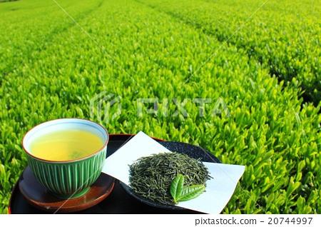 茶 綠茶 新茶葉 20744997