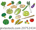 蔬菜 矢量 插图 20752434