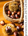 Sweet chestnut (Castanea sativa) 20752636