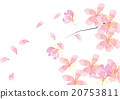 cherry blossom flowers background  20753811