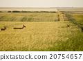deer, wildlife, animal 20754657