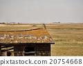 Rural Saskatchewan 20754668