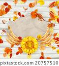 autumn, sunflower, design 20757510