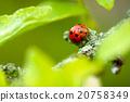 closeup ladybug 20758349
