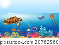 海 海洋 游泳 20762560