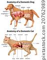 anatomy, domestic, dog 20762989