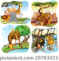 Wild animals living in the forest 20763023