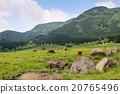 aso, graze, grazing 20765496