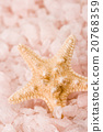 starfish in the sea salt 20768359