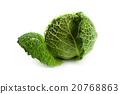 fresh savoy cabbage 20768863