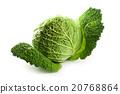 fresh savoy cabbage 20768864