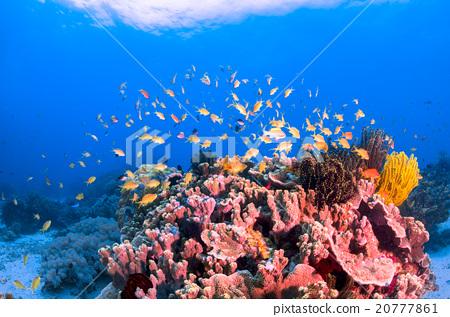海底的 海里 珊瑚 20777861
