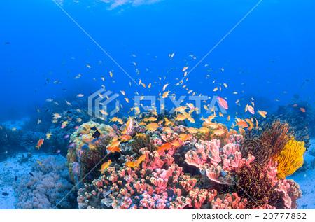 海底的 海里 珊瑚 20777862