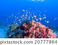 海底的 海里 珊瑚 20777864