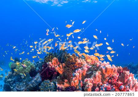 海底的 海里 珊瑚 20777865