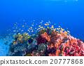海底的 海里 珊瑚 20777868