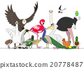 鳥兒 鴕鳥 天鵝 20778487
