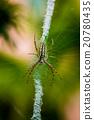 昆虫 巨大 宏观 20780435