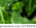 巨大 宏观 自然 20780648