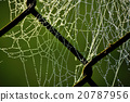 Morning dew on spider webs 20787956