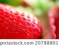 草莓 20788801