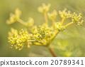 花 花朵 花卉 20789341