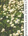 花 開花 原野 20789417